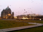 Crows by the Berlin Dome