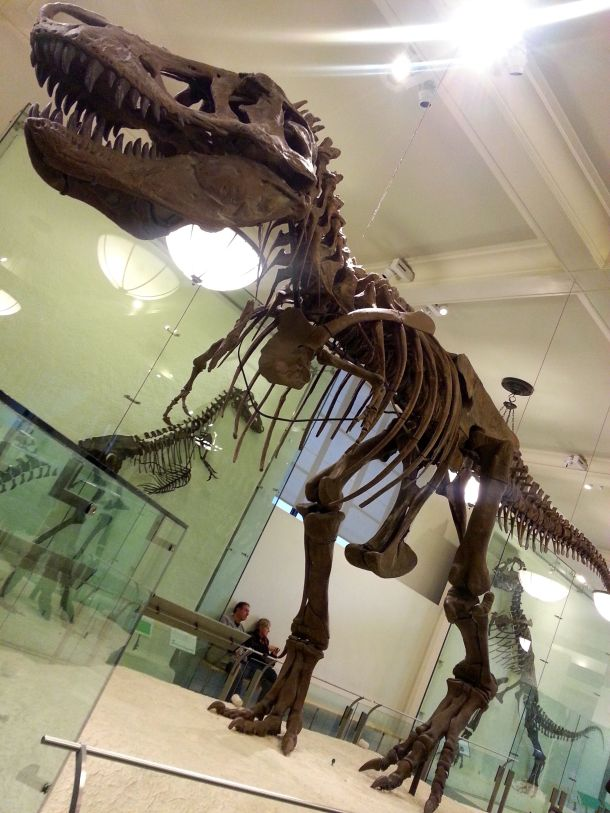 nyc american natural history museum trex skeleton
