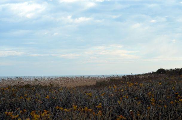 Horseneck Beach - 05