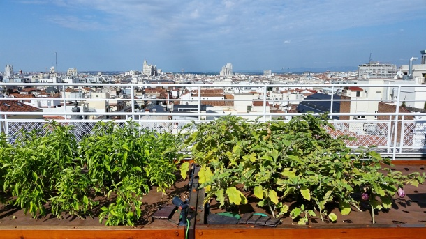 2 Vegetable garden on the roof of Hotel Wellington