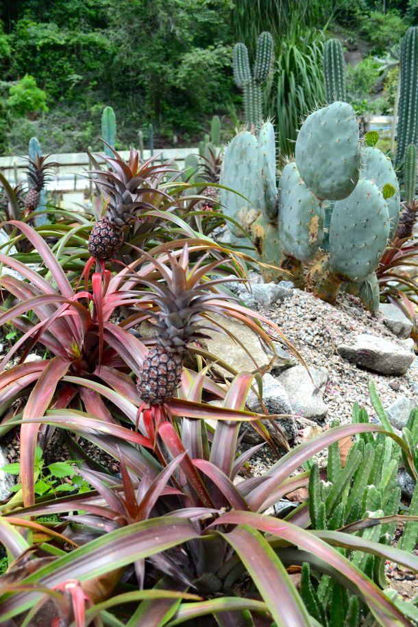 Call Me Katie - Rio de Janeiro Botanical Gardens - 05