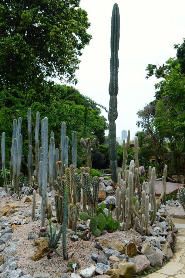 Call Me Katie - Rio de Janeiro Botanical Gardens - 06