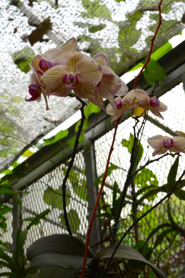 Call Me Katie - Rio de Janeiro Botanical Gardens - 14