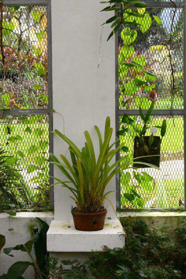 Call Me Katie - Rio de Janeiro Botanical Gardens - 16