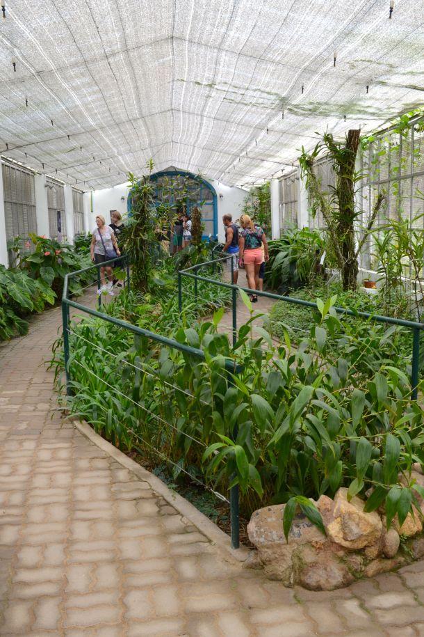 Call Me Katie - Rio de Janeiro Botanical Gardens - 17