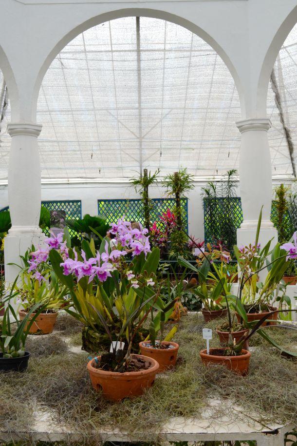Call Me Katie - Rio de Janeiro Botanical Gardens - 18