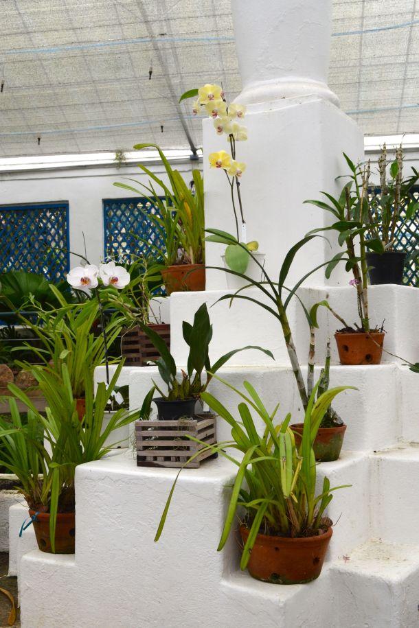 Call Me Katie - Rio de Janeiro Botanical Gardens - 19