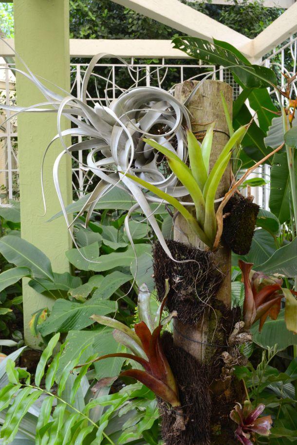 Call Me Katie - Rio de Janeiro Botanical Gardens - 23