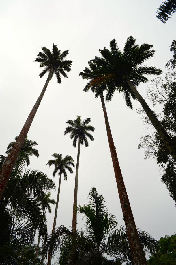 Call Me Katie - Rio de Janeiro Botanical Gardens - 26