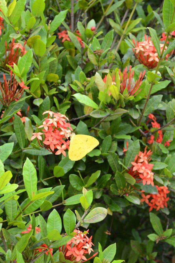 Call Me Katie - Rio de Janeiro Botanical Gardens - 31
