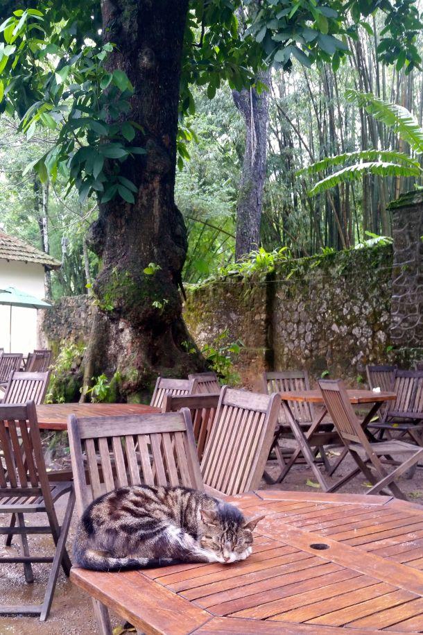 Call Me Katie - Rio de Janeiro Botanical Gardens - 38
